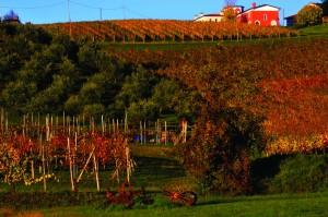9settembre Fara,vigne e ulivi17